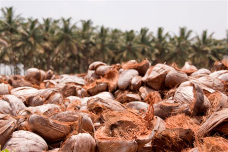 Coir Pith Blocks Manufacturer Of Coconut Palm Products As